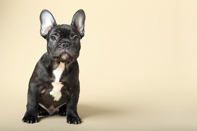 1-puppy.jpg