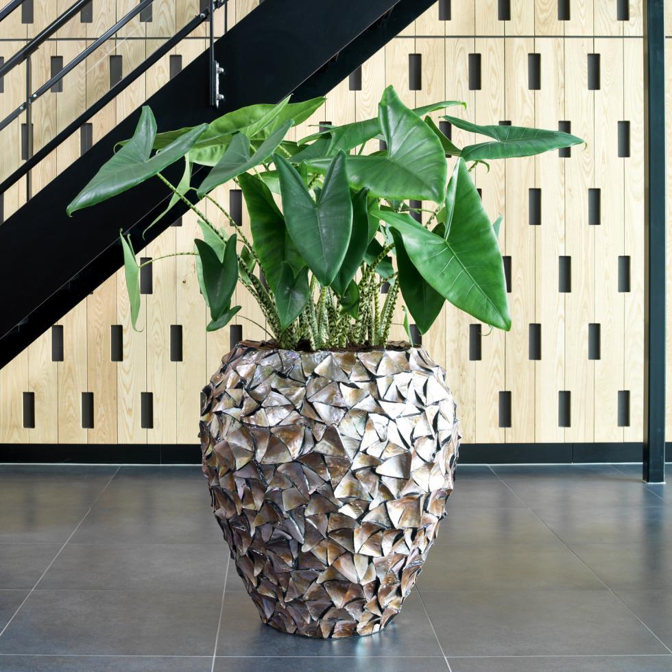 19499_muschel-shell-vase_mopbrown_074x080_005.jpg