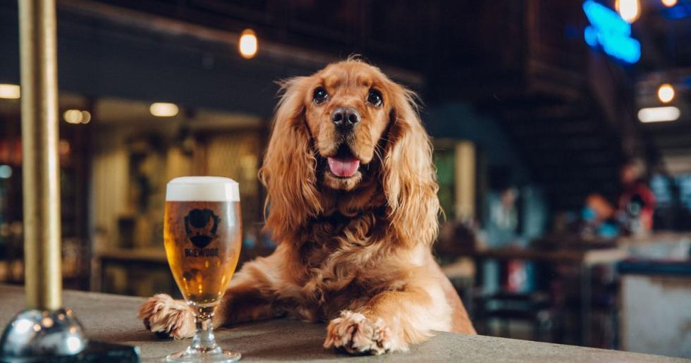 BrewDog-Puppy-Parental-Leave-programme.jpg