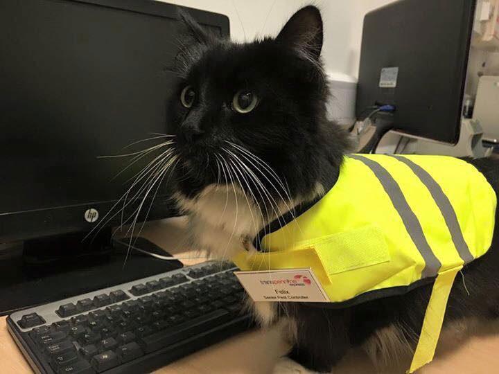 felix-the-huddersfield-cat.jpg