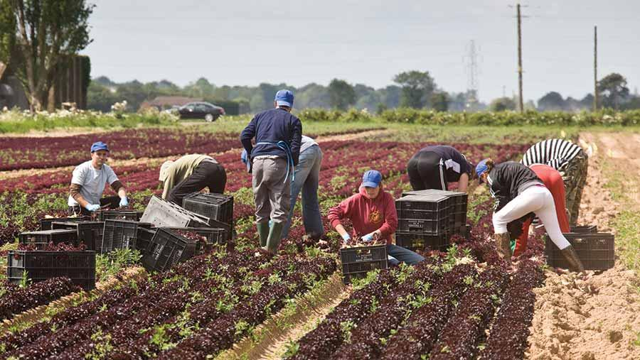 Migrant-workers-CR-Tim-Scrivener.jpg