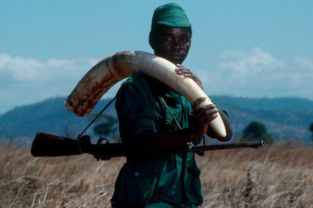 PROD-Confiscated-Ivory.jpg