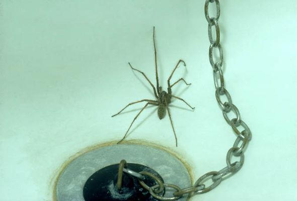 Spider-633917.jpg