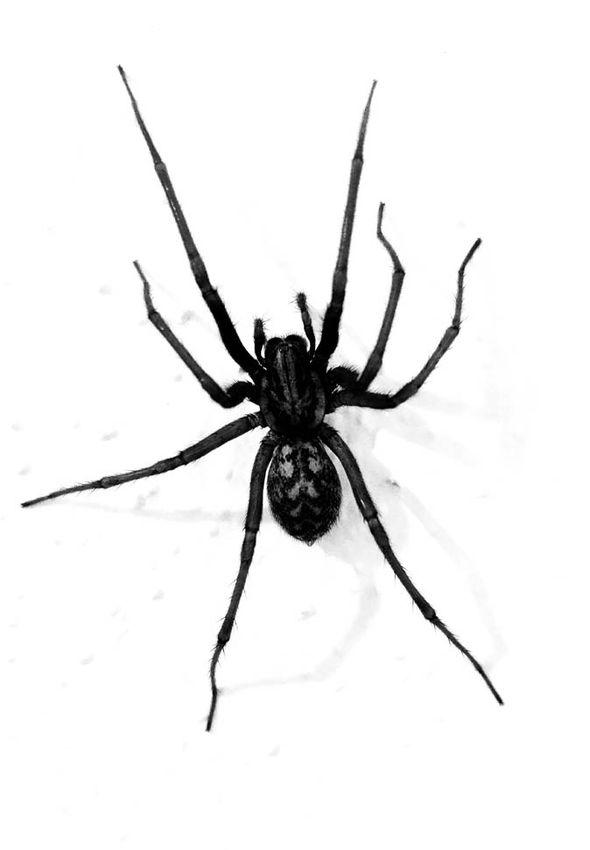 Spider-633925.jpg