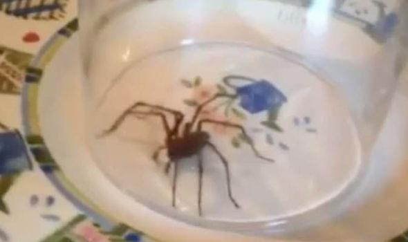 Spider-703775.jpg