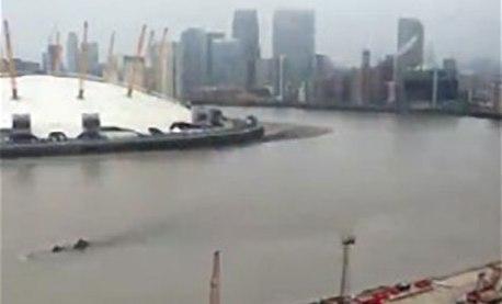 Thames-Fins.jpg